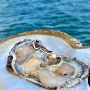 Perlen Auster hempeline MeerMeer